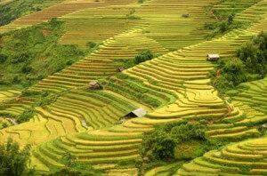 montagne nord Vietnam