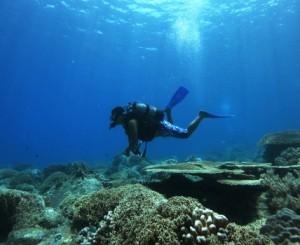 Six Senses vietnam corail
