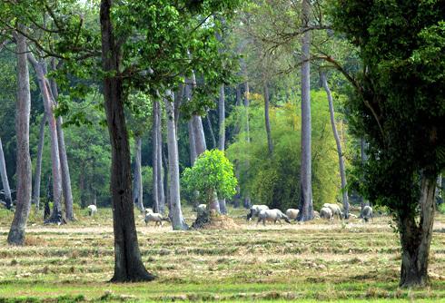 Le Parc national de Cat Tien: un paradis de l'écotourisme
